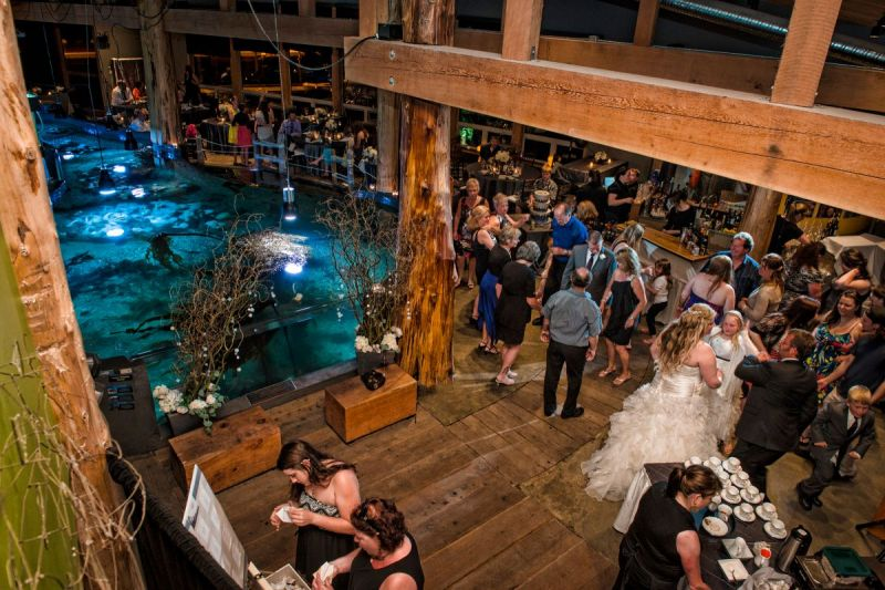 wedding at the Ucluelet Aquarium